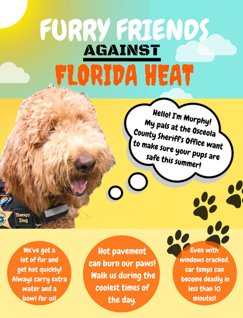 Furry Friends Against Florida Heat