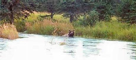 bear viewing salmon fishing trips