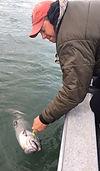 alaska king salmon release