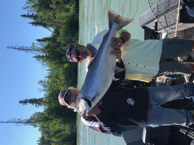 Kenai King salmon