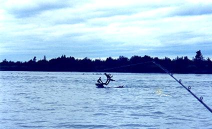 kenai river fishing guides Alaskafishing charters