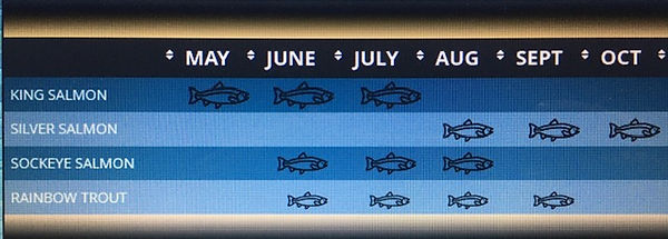 kenai river salmon run chart