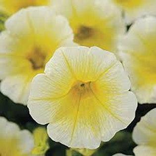 Easy Wave® Spreading Petunia Yellow