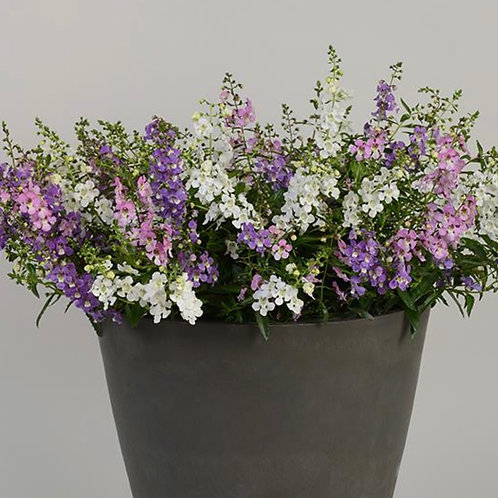 """Summer Bouquet 6"""""""