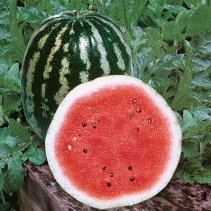 Crimson Sweet Watermelon 4 pack