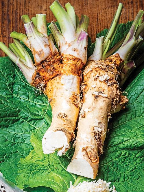 """Horseradish 6"""""""