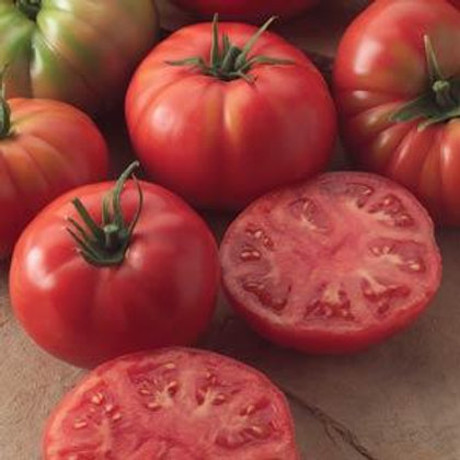 Champion Tomato 4 pack