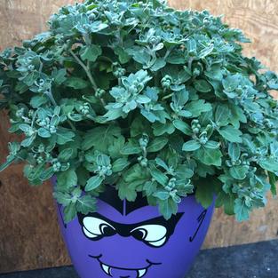 Monster Pot $8