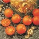 SunSugar Cherry Tomato Single