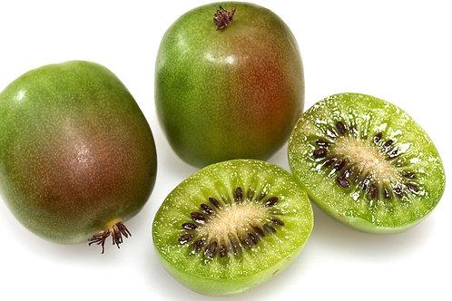 Kiwi Prolific