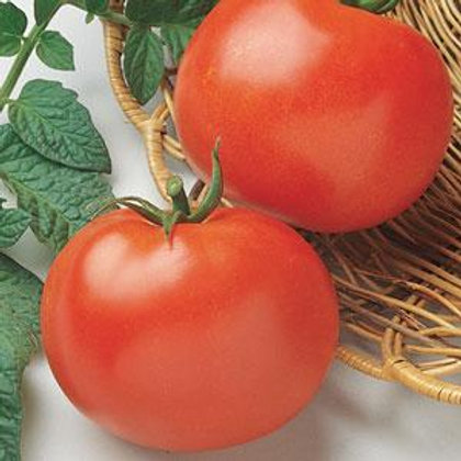 Rutgers Tomato 4 pack