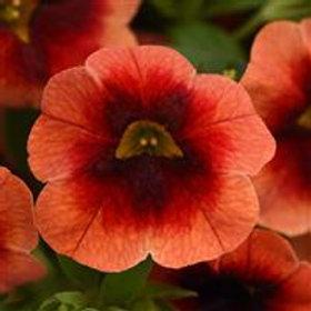 MiniFamous Lava Red Eye Neo Calibrachoa