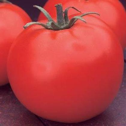 Celebrity Tomato 4 pack