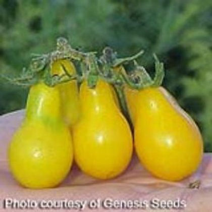 Yellow Pear Tomato Single