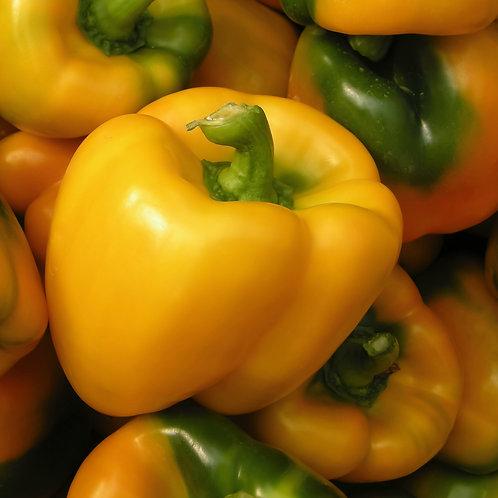 Golden Bell Pepper Single