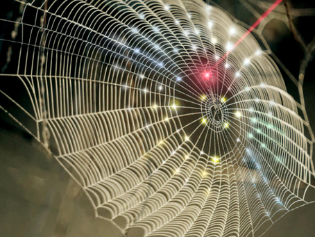 Spider webs are being used to make music?