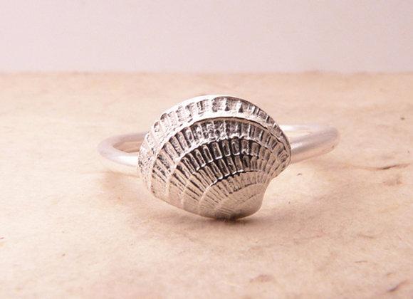 Silver Ark Shell Ring