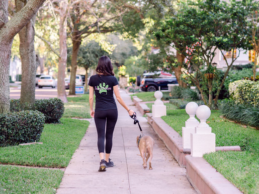 Furry Ventures Pet Care personal branding session