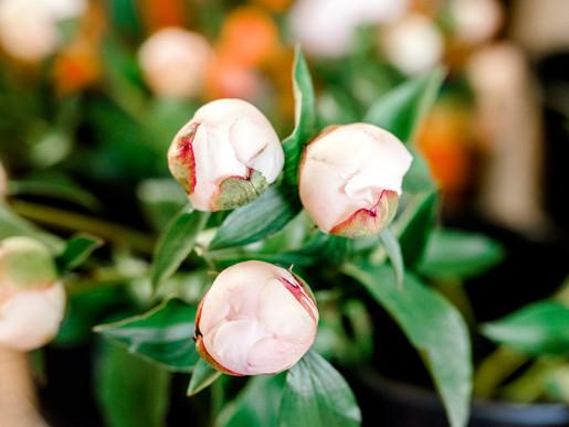 Jennies Flowers lifestyle headshots