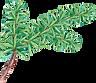 De pino rama de árbol