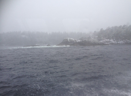 A Trip to Hot Springs Cove on Vancouver Island