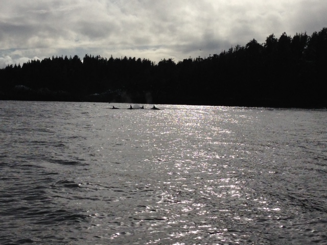 Killer Whales were a great addition to our trip at Hot Springs Cove near Tofino!