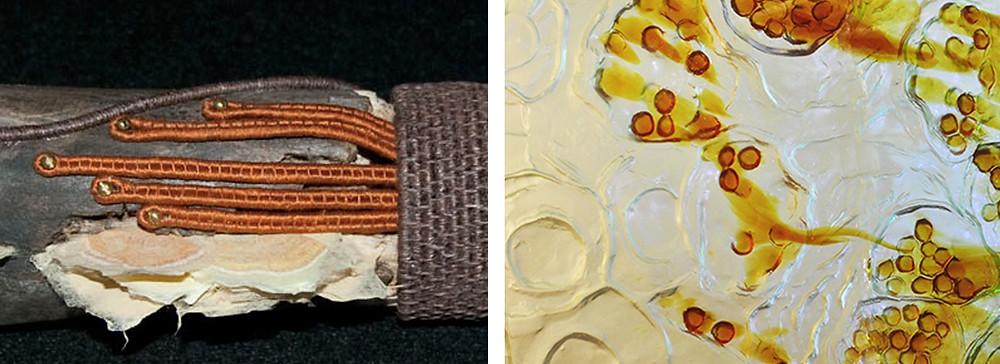 Char Norman 'Shelf Mold' 2010 (left) Natalie Tyler 'Virus' (right)