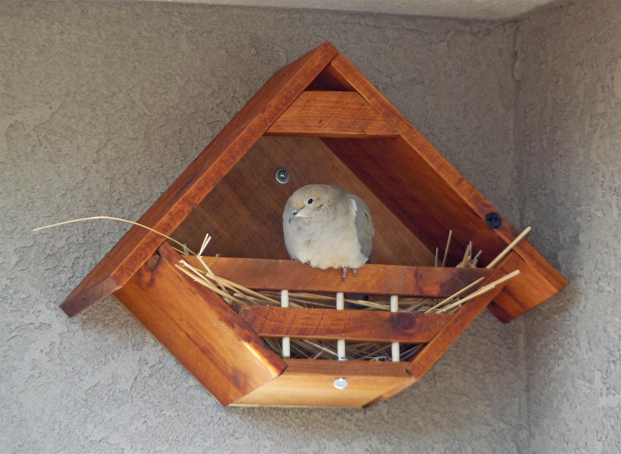Original_Dove_01