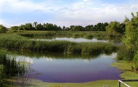 Graystone Realty Pelican Lake Ranch 2
