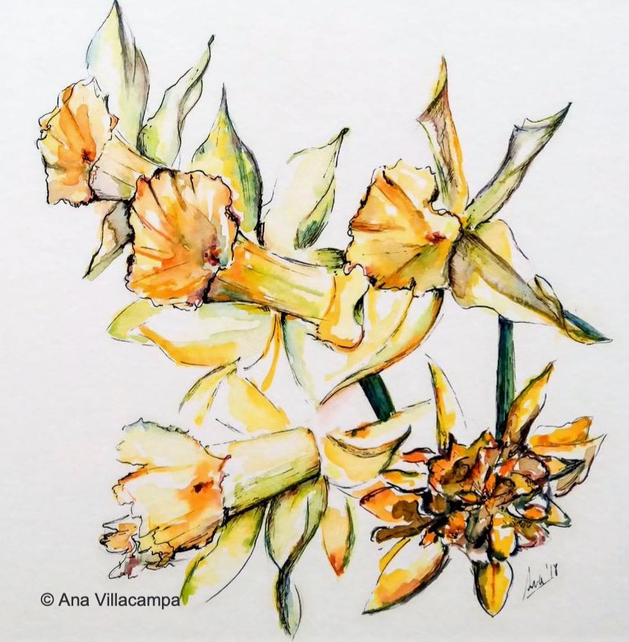 """Daffodils"" by A. Villacampa"