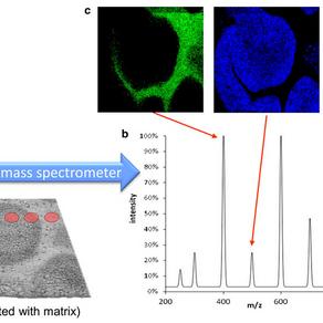 Macademics: Mass Spectrometry Imaging