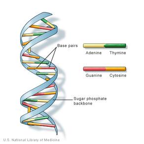 Macademics: Got Royalty Inside My DNA