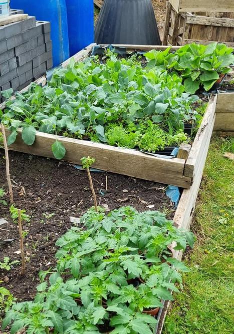 Plasnewydd Plants to give away.jpg