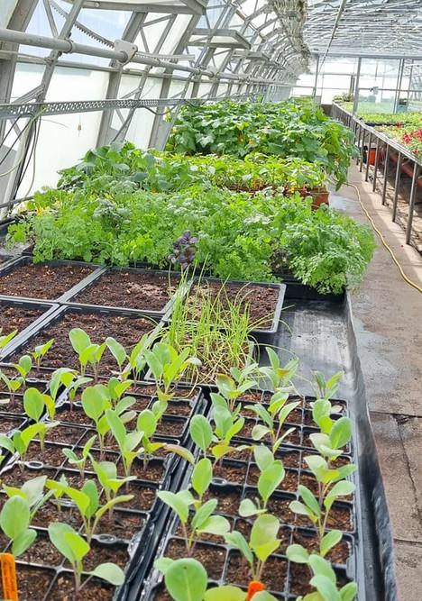 Bute Park Nursery Plug Plants 29.04.2021