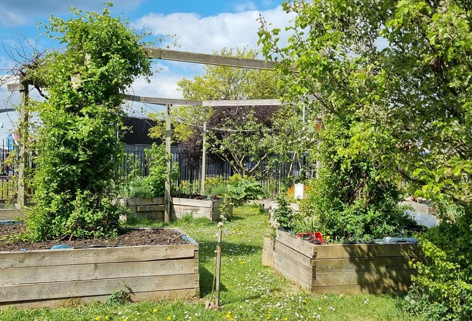 Plasnewydd Community Garden.jpg