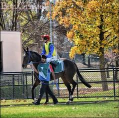 racing_3_20120611_1593708624-30-600-450-