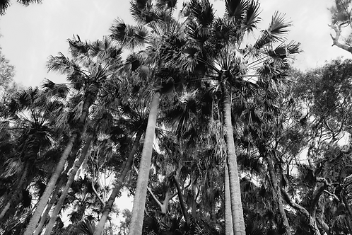 PALM PARADISE | Green Cathedral