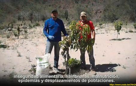 Dejaron caer el 'top ten' agrícola de Chihuahua