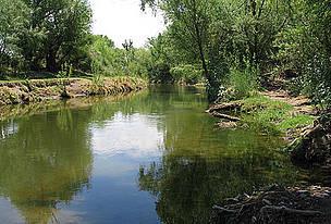 Más de uno cuida humedales  del río San Pedro en Meoqui