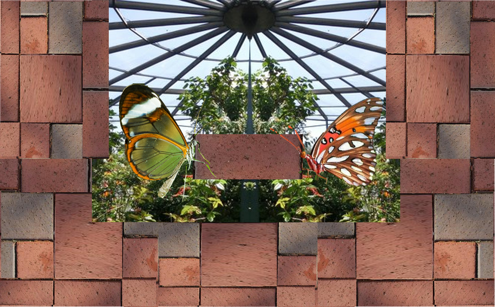 SCBF Butterfly Warrior House 2019_edited
