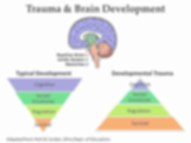 Trauma%20brain%20development_edited.png