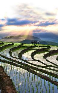 Fotolia THAILANDE.jpg