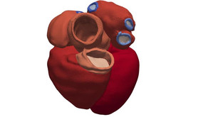 Digital heart model will help predict future heart health, new study finds