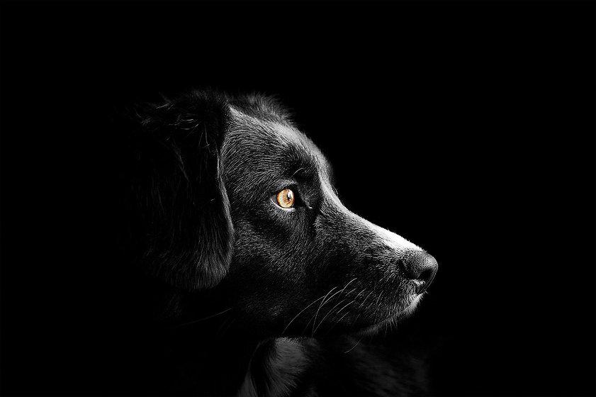 dog-4118585_1920.jpg