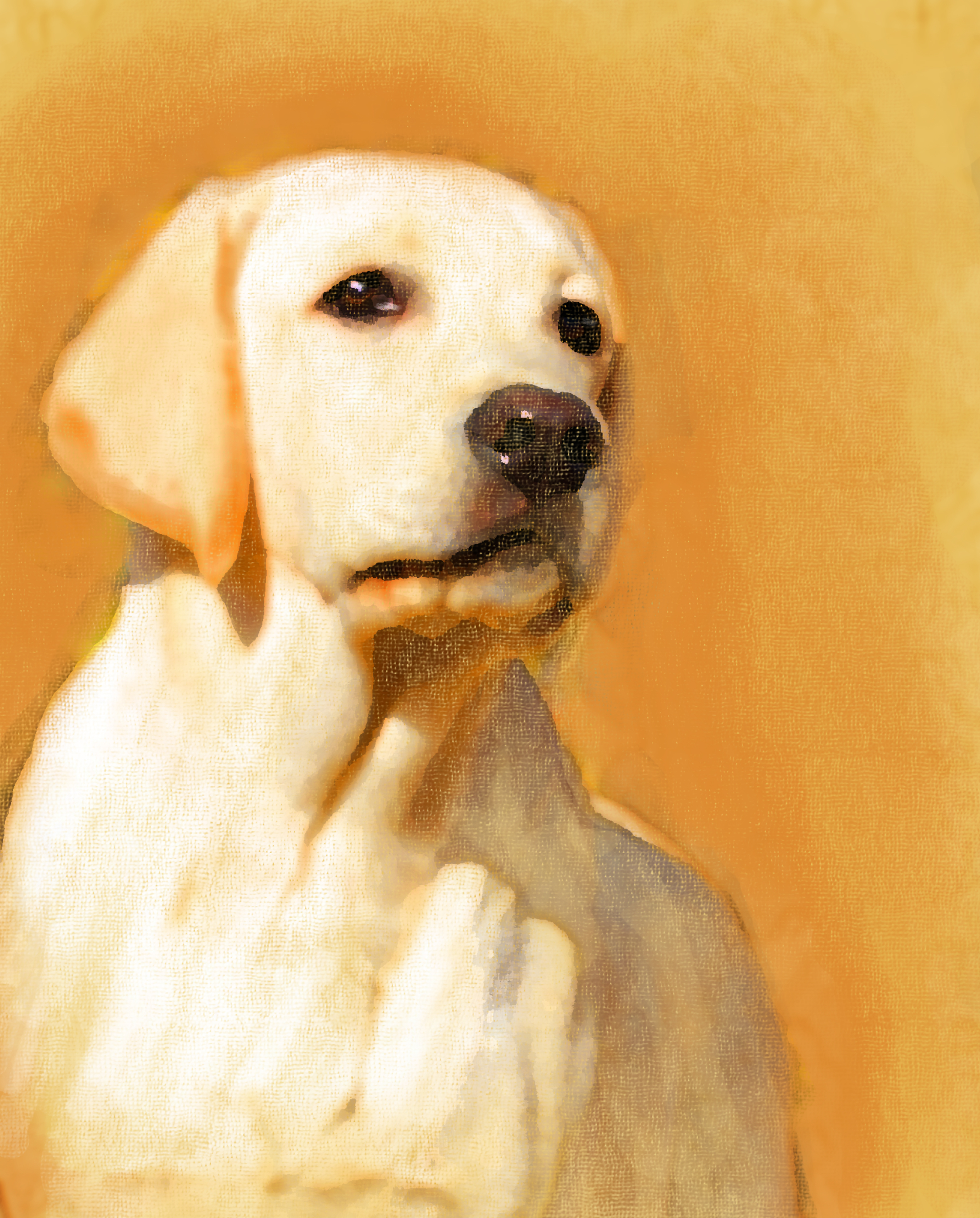 A young yellow labrador oil portrait.jpg