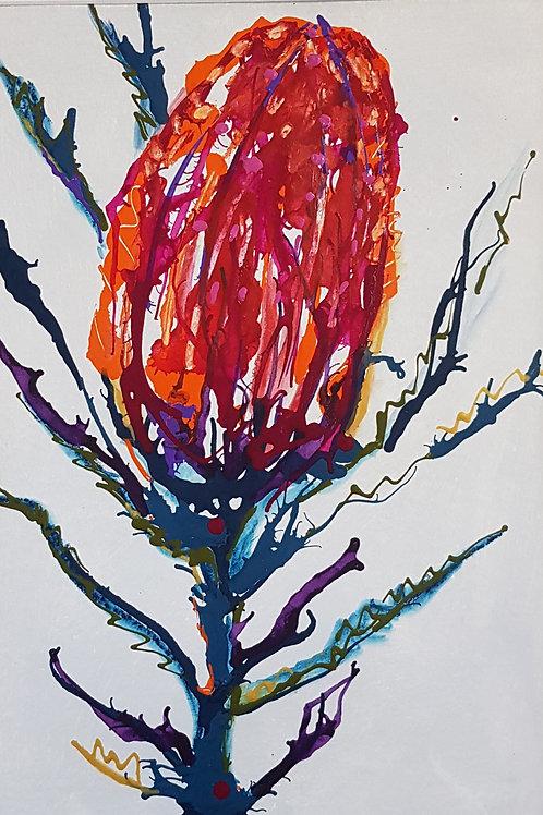 Banksia #1