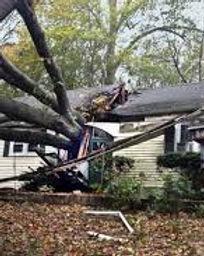 tree into house.jpeg