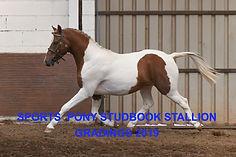 Abbeywoods%20Under%20Pressure-PC4_2451-(
