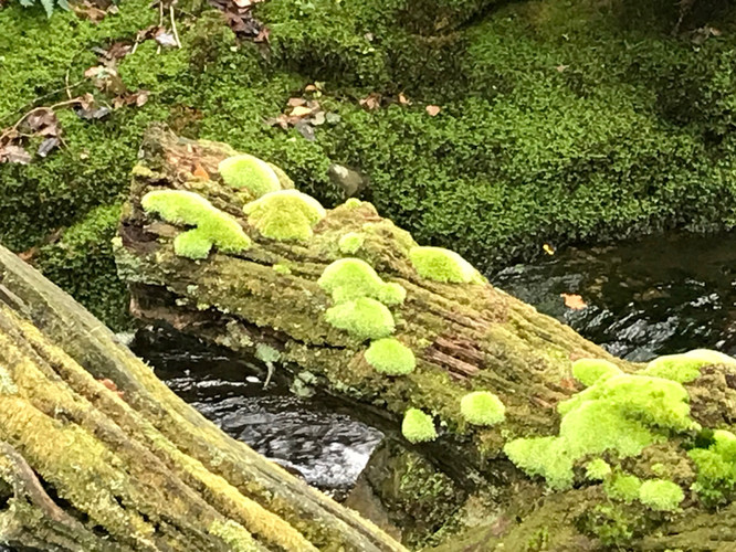 Dendles Wood.jpg
