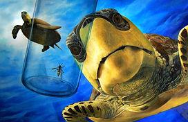 turtles, children's book illustration, whale, wasp, illustration, Eric Stegmaier, www.ericstegmaier.com